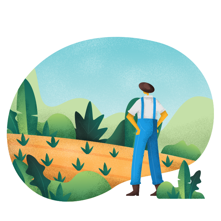 Illustration of farmer looking out into their young crop